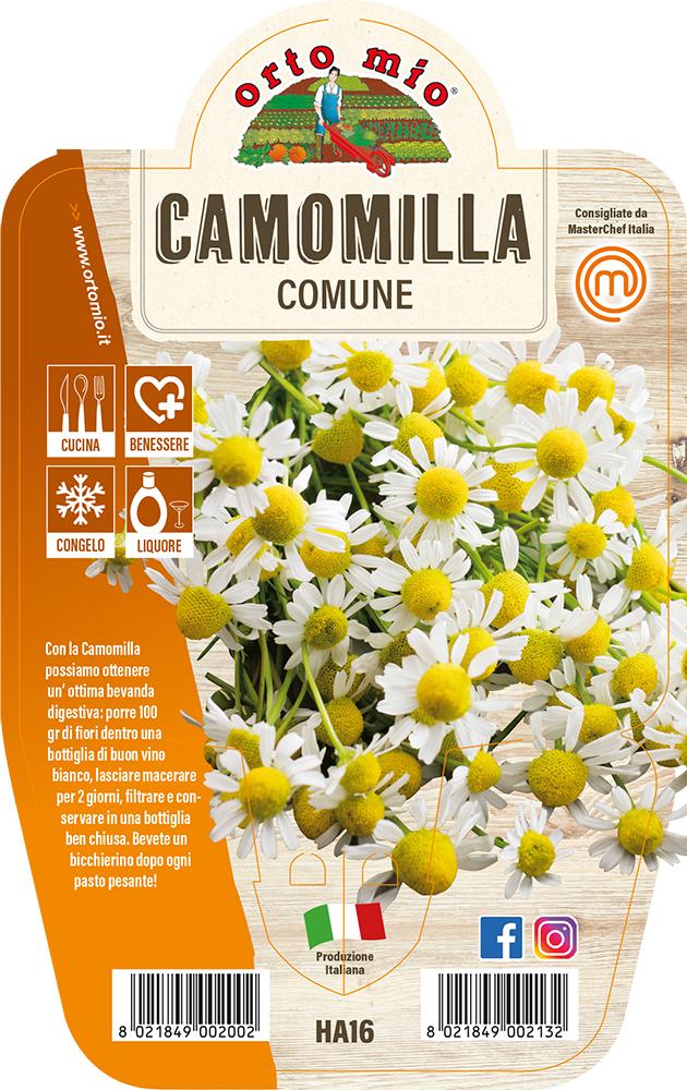 Camomilla Piante ed erbe aromatiche in vaso d.14