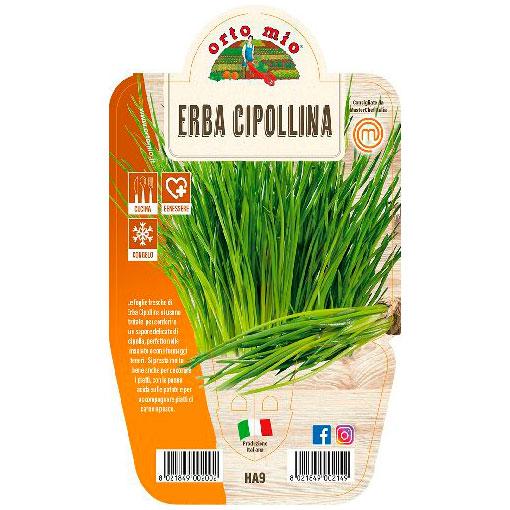 Erba Cipollina Piante ed erbe aromatiche in vaso d.14