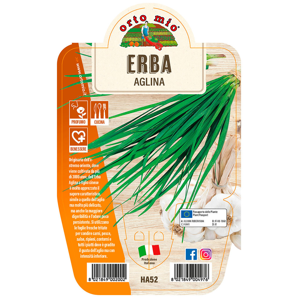 Erba Aglina  Piante ed erbe aromatiche in vaso d.14