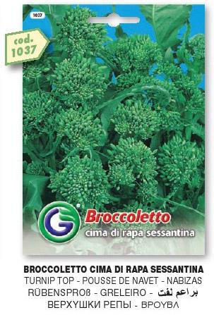 Broccoletto CIMA DI RAPA sessantina in busta maxi