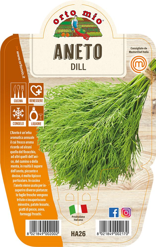 Aneto Piante ed erbe aromatiche in vaso d.14
