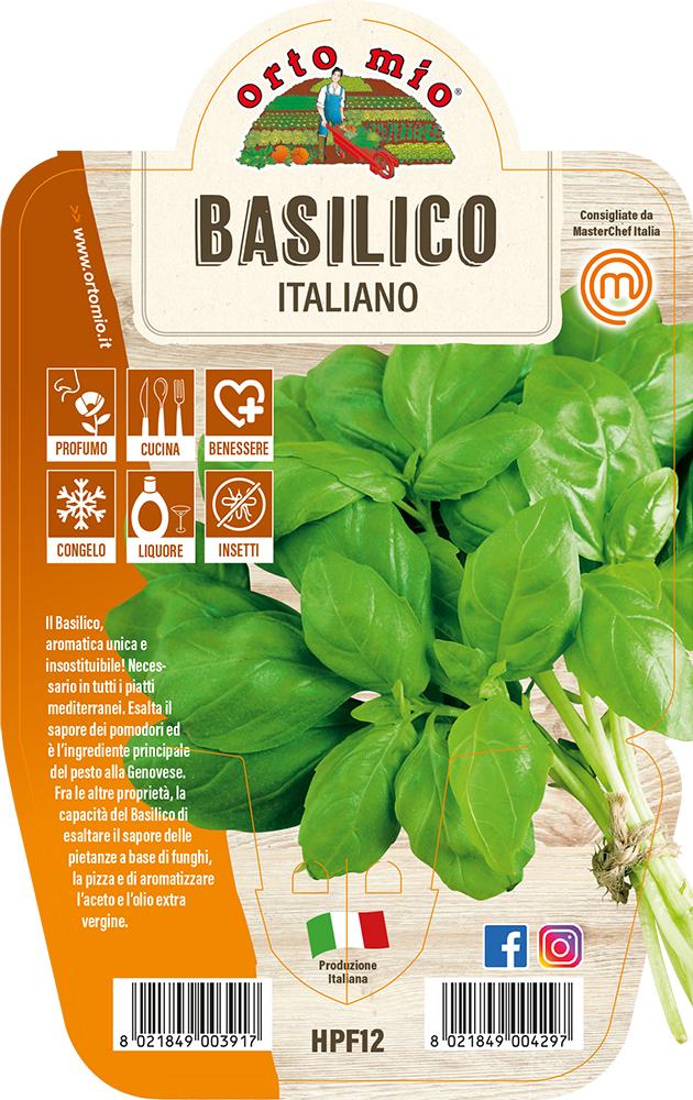 Basilico italiano Piante ed erbe aromatiche in vaso d.14