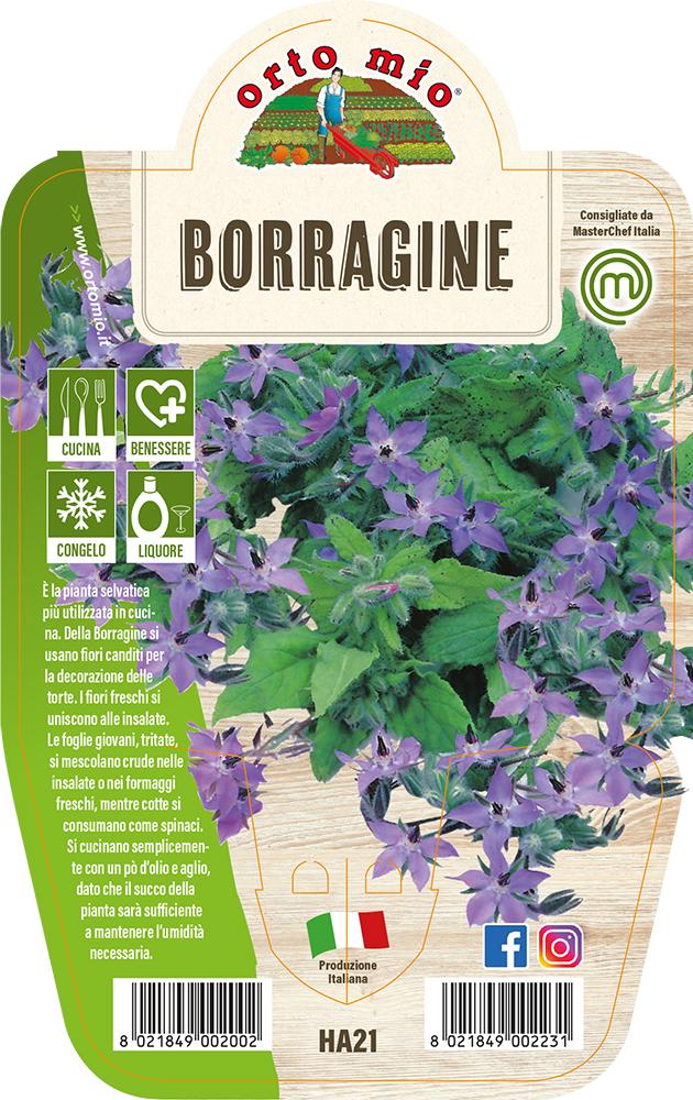 Borragine Piante ed erbe aromatiche in vaso d.14