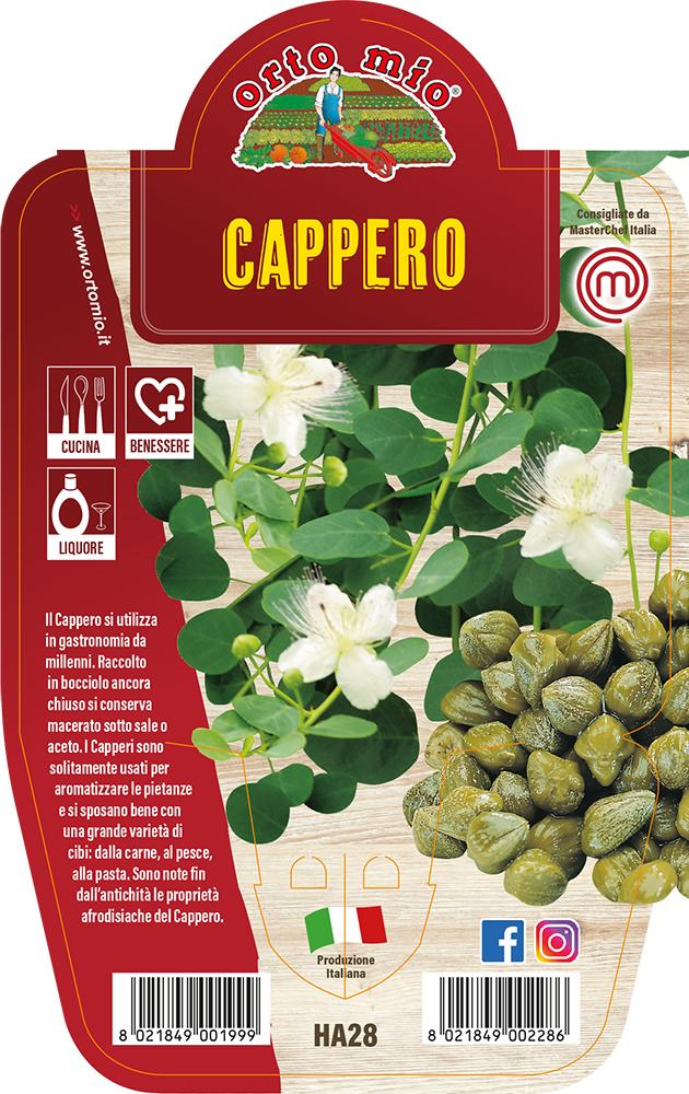 CAPPERO Piante ed erbe aromatiche in vaso d.14