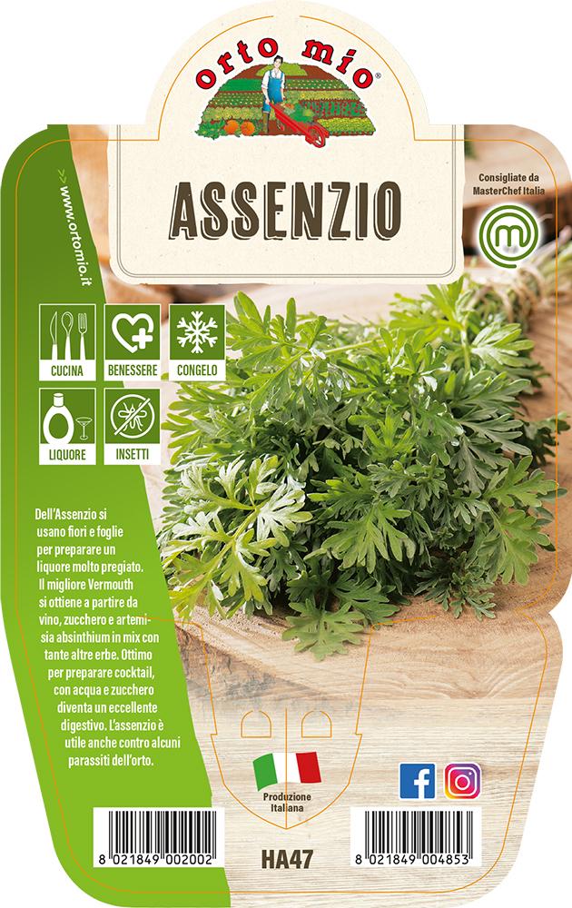 Assenzio Piante ed erbe aromatiche in vaso d.14