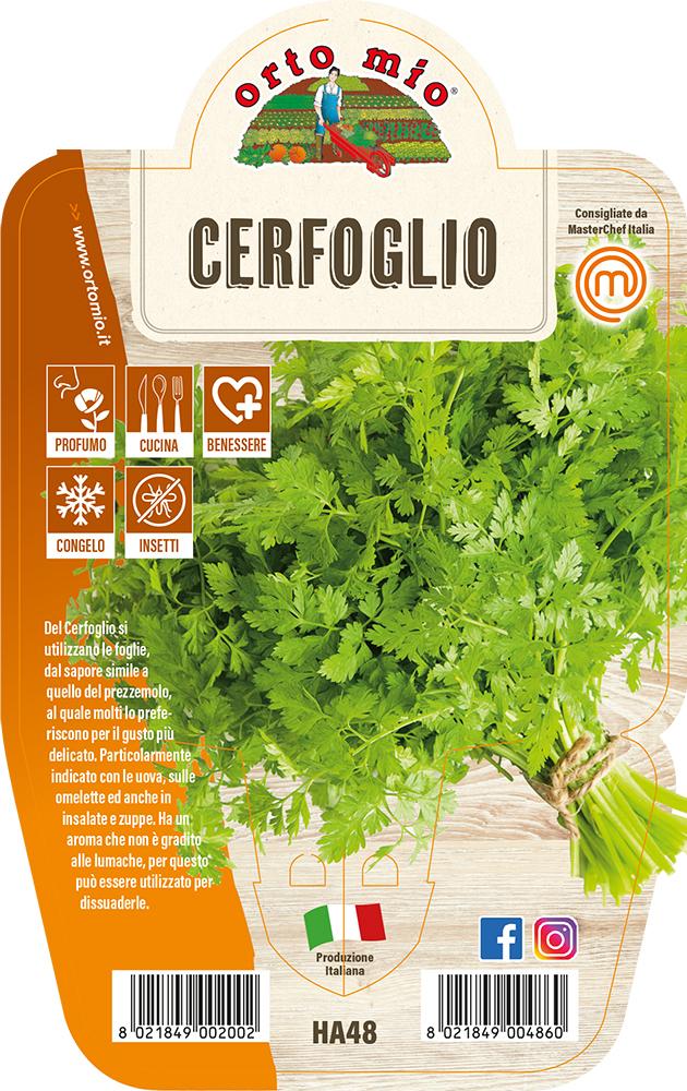CERFOGLIO Piante ed erbe aromatiche in vaso d.14