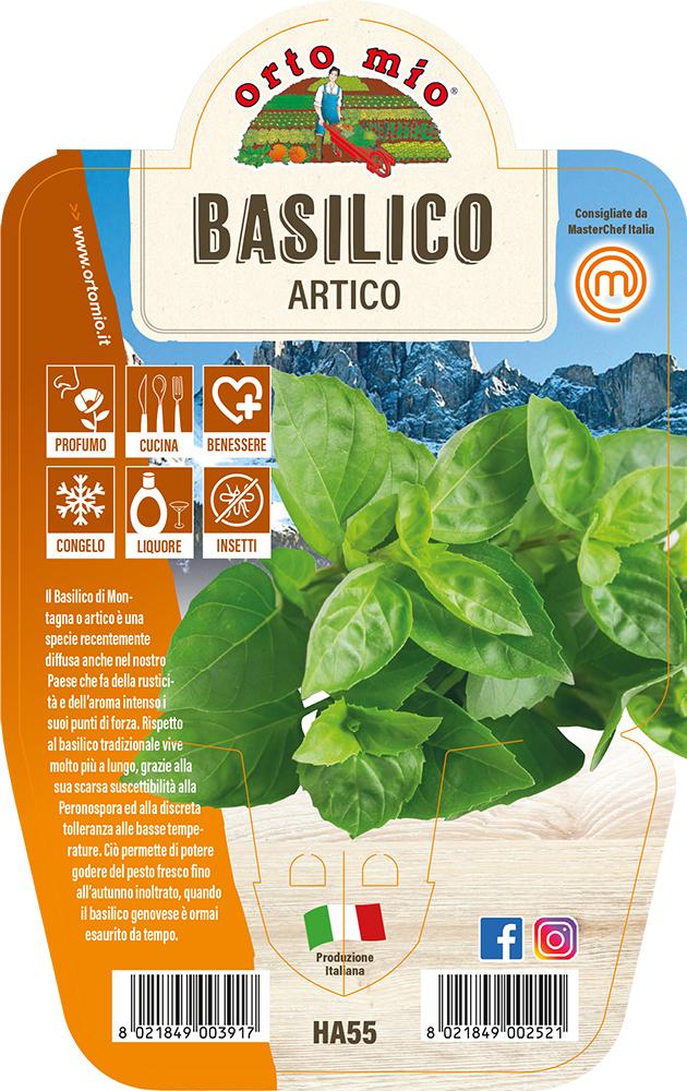 Basilico Artico Piante ed erbe aromatiche in vaso d.14