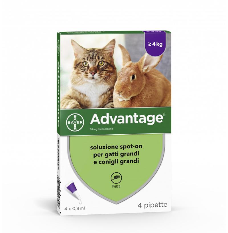 ADVANTAGE 4 pipette soluzione ANTIPULCI spot-on per gatti