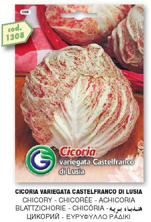 Cicoria variegata di CASTELFRANCO DI LUSIA in busta maxi