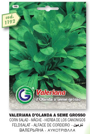 Valeriana d'Olanda a seme grosso in busta maxi