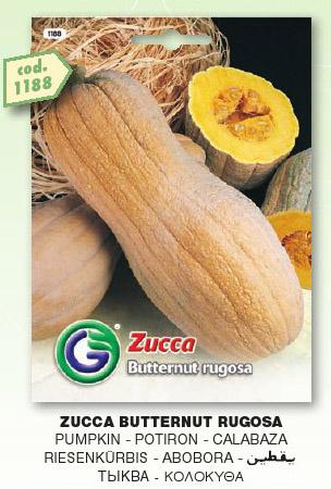 Zucca BUTTERNUT rugosa in confezione da 500gr