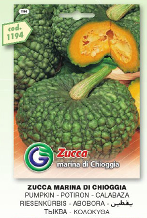 Zucca MARINA DI CHIOGGIA in busta maxi