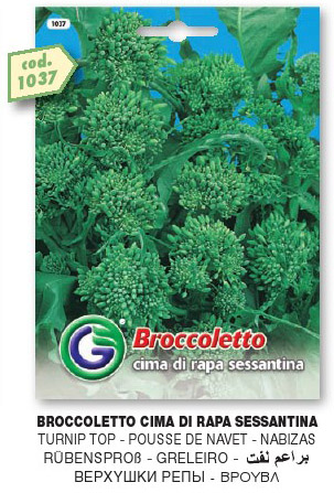 Broccoletto CIMA DI RAPA sessantina in busta maxi