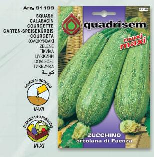 Zucchino ortolana di Faenza in busta maxi maxi