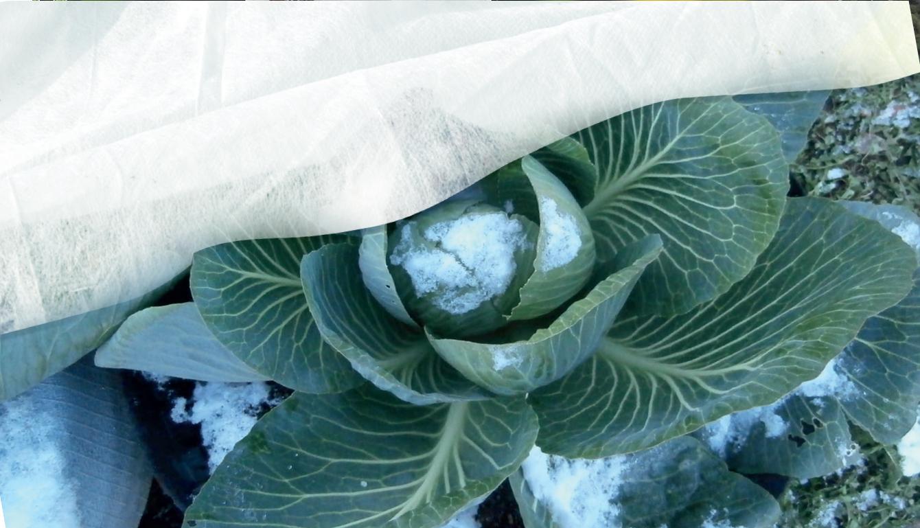 Compracomodo caldo telo artic di tessuto non tessuto mt 2x10 per colture e piante 30gr mq - Telo tessuto non tessuto giardino ...